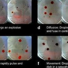 Evolution in Oil Droplets