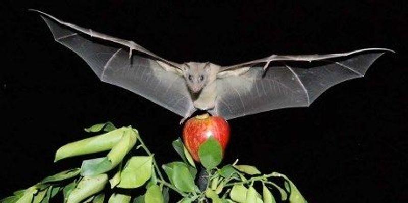 Bat Navigation Revealed
