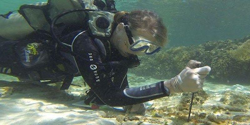 Marine Biologist Susan Williams Dies