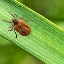 Diseases From Ticks and Mosquitoes Have Tripled