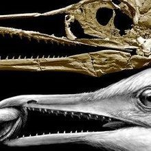 Image of the Day: Bird Braincase