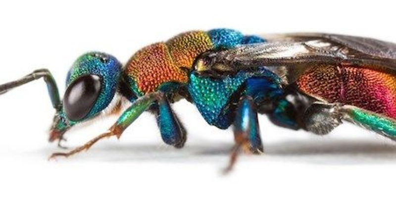 Genetic Data Clarify Insect Evolution
