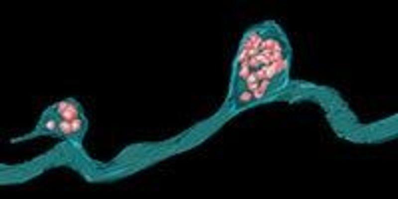 Mitochondria Munchers