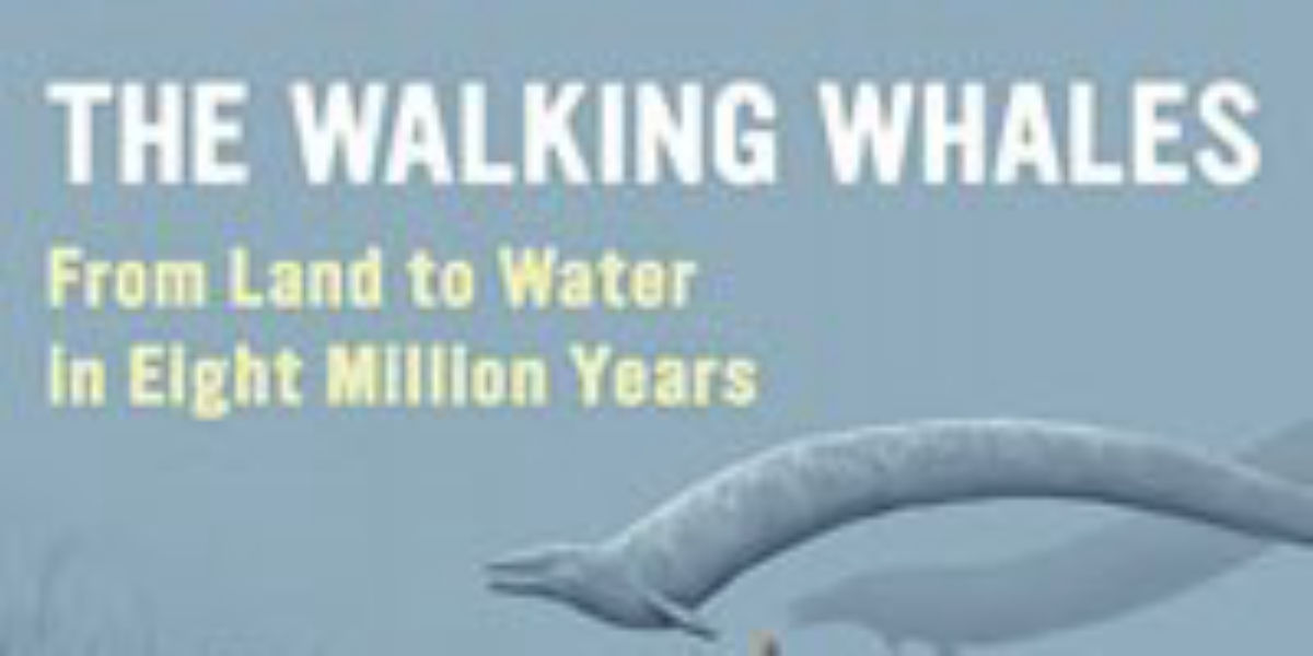 Book Excerpt From The Walking Whales The Scientist Magazine
