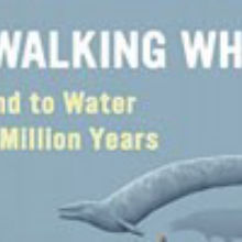 Book Excerpt from <em>The Walking Whales</em>