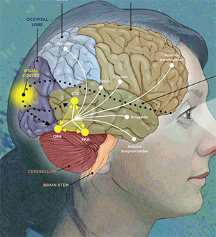 A Face to Remember   The Scientist Magazine®  A Face to Remem...