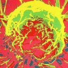 Tumor Exosomes Make microRNAs
