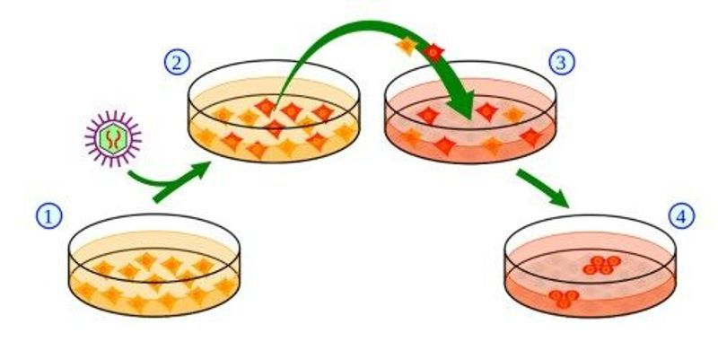 Electromagnetism Promotes Pluripotency: Study
