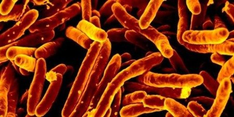 WHO: TB's Toll Worse Than Thought