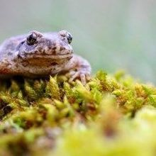 Virus Decimating Spanish Amphibians