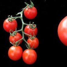 360-Degree View of the Tomato