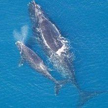 Proposed Seismic Surveys Raise Concern Over Health of Marine Life