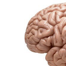 What Made Human Brains So Big?