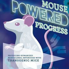 Mouse Powered Progress: Producing Humanized Monoclonal Antibodies With Transgenic Mice