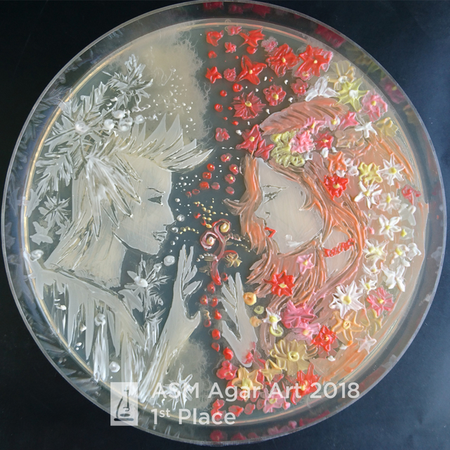Image result for agar art contest