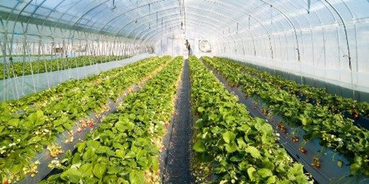 importance of plant physiology in agriculture
