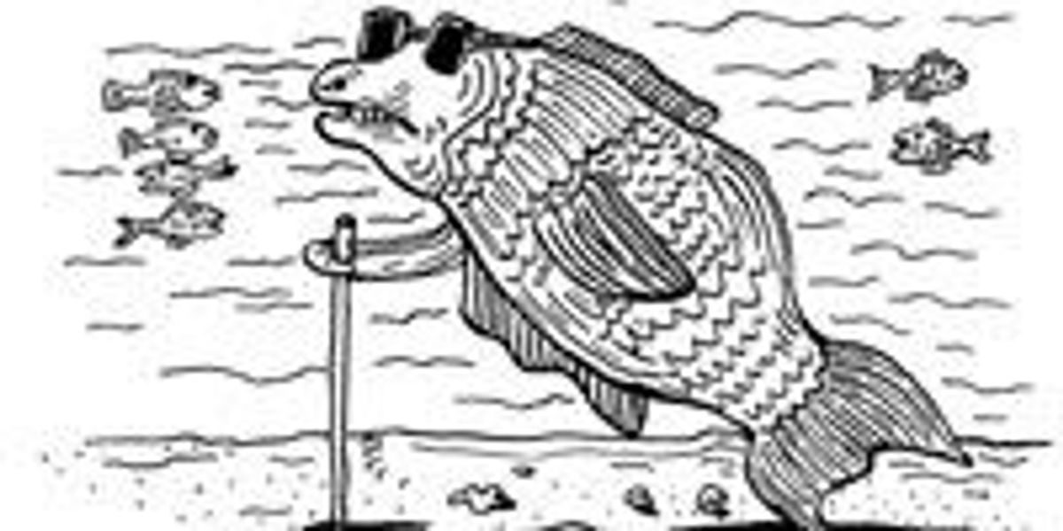 One Fish Two Fish The Scientist Magazine