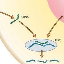 FDA OKs siRNA Ebola Drug
