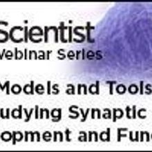 New Models and Tools for Studying Synaptic Development and Function