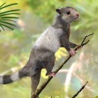 Prehistoric Critters Change View of Mammal Evolution