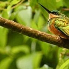 Bird Diversity Drops From Forests to Farms