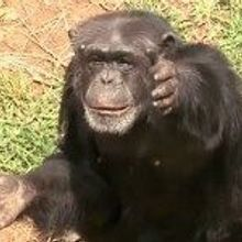 TS Live: Handy Apes