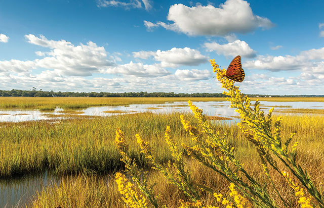 Beyond the blueprint the scientist magazine a genetic web interacting species such as this gulf fritillary butterfly agraulis vanillae feeding on goldenrod blooms at the edge of a salt marsh on malvernweather Image collections