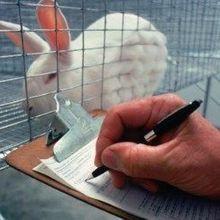 Certification No Guarantee of Animal Welfare