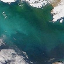 Viral Demise of an Algal Bloom