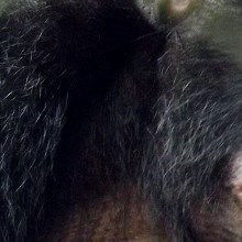 Are Apes as Empathetic as Humans?