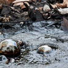 Microbes in a Tar Pit