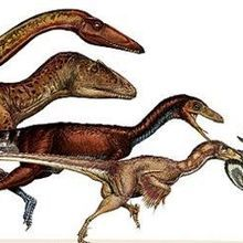 How Tinier Theropods Took Flight