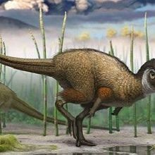 Fossil Freshens Views on Dinosaur Feathers
