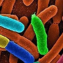 New Catalog of Human Gut Microbes