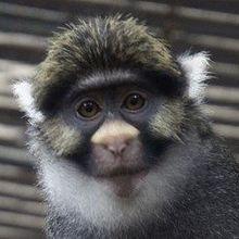 Monkey See, Monkey Don't