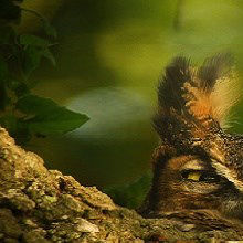Image of the Day: Hoo's There?