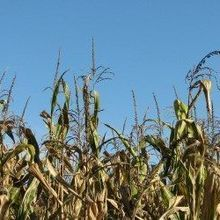 Retracted GMO Study Republished