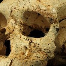 Skull Collection Helps Explain Early Neanderthal Evolution