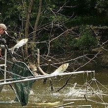 Combating Asian Carp