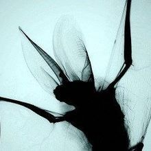 Image of the Day: X-ray Wings