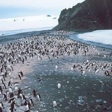 New Bird Flu Found in Penguins