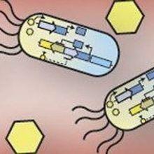 Engineered Microbes Act as Sensors