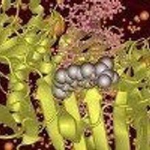 Pain Meds Fight Bacteria