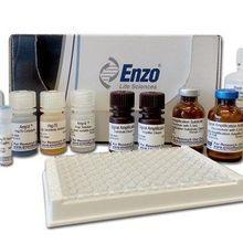 Amp'd™ HSP70 High Sensitivity ELISA Kit