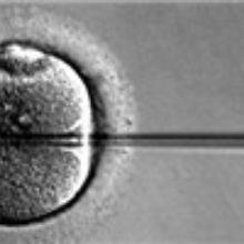 UK To Legalize Three-Parent IVF?