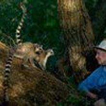 Esteemed Primatologist Dies