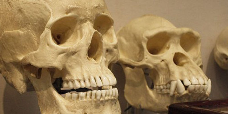 Opinion: Confronting Creationism