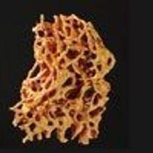 Tenacious Termites