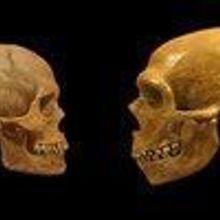 Inner Neanderthal