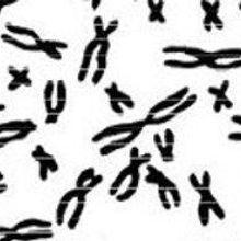 Genome Update